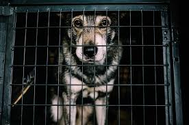 Image result for abandoned desperate caged dog