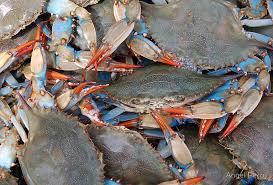 Crab Size Chart Nj Males Vs Females Crab Blab