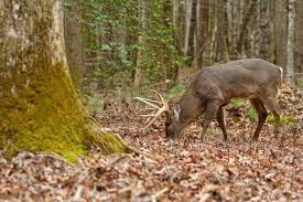 Types Of Acorns Chart Everything You Need To Know About Acorns Deer Hunting