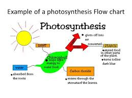 Cell Energy Flow Chart Photosynthesis And Cellular Respiration Answer Key Energy Flow Chart Biology Www Bedowntowndaytona Com
