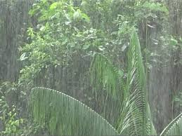 tropical rainforest raining. Interesting Tropical SD Rights Managed Stock Footage  677483521 Throughout Tropical Rainforest Raining