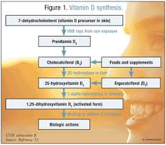 25 Hydroxyvitamin D Level Chart Vitamin D Supplementation An Update