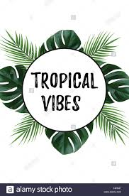 Tropical Vibes With Monstera Plants Border Vacation Quotes Beach