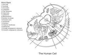 Miglior Collezione Cellula Vegetale Da Colorare Disegni Da Colorare