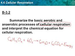 1 4 4 cellular respiration b 3 2 summarize the basic aerobic and anaerobic processes of cellular respiration and interpret the chemical equation for
