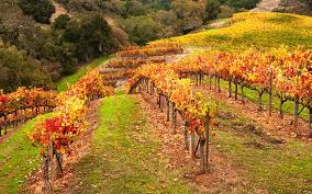 How Wine Country Looks in Fall   Wine Country Getaways