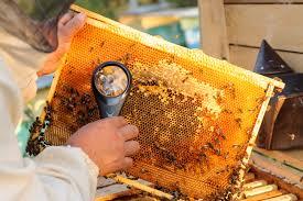 How To Treat Varroa Mites A New Perspective Backyard