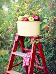 Apples Apple Orchard Picking - Free photo on Pixabay