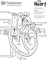 Coloring Pagesheart Heart Coloring Pages Anatomy Free Printable Book