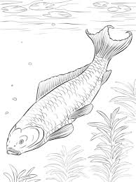 Small Picture Koi Fish coloring page Free Printable Coloring Pages