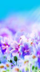 purple pretty flowers iphone 6s wallpapers hd
