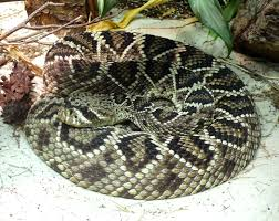 List Of Fatal Snake Bites In The United States Wikipedia