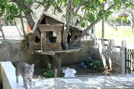 outdoor cat house tree gumtree