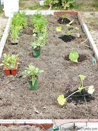 maximize your small garden space with urban square foot gardening for beginners a complete guide