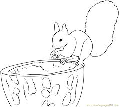 Forest Cute Squirrel Coloring Page Free Squirrel Coloring Pages
