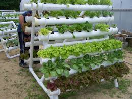 indoor hydroponic vegetable garden. Is A Great Example Of How Well It Can Work.The Tubes In The Picture Are NOT PVC!!! Check Printed Label. (amazing Indoor Hydroponic Vegetable Garden
