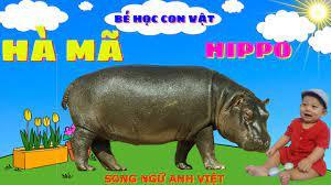 Con Hà Mã #Hippo - Tiếng Hà Mã Kêu | Con Vật Cho Bé Nhanh Biết Nói