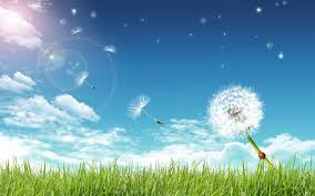 grass and sky backgrounds. Interesting And Grass Blue Bright Sky And A Dandelion Throughout Grass And Sky Backgrounds