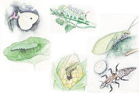 insects are a massive and complex subject and what i hope to do here is just to introduce the concept of good bugs