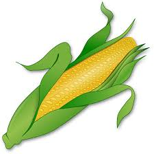 Corn Allergies and Sensitivities | Balance Fitness and Nutrition