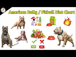 American Pitbull Terrier Feeding Chart American Bully Pitbull Diet Chart Dog Diet Food At Mix