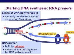 ap biology dna replication ap biology watson and crick  19 ap biology dna polymerase iii replication