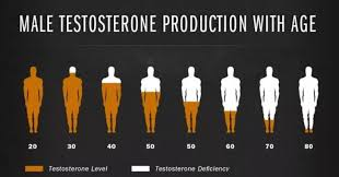 What Is Average Testosterone Level By Age Culture11