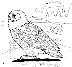 Small Picture Snowy owl coloring page Coloringcrewcom
