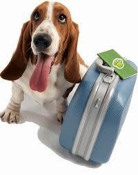 Hasil gambar untuk Prepare and Travel Comfortably With Your Pets