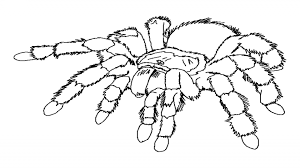 Small Picture top 10 free printable spider coloring pages online nice coloring