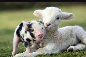 Image result for images of farm animals