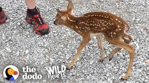 deer spiritual meaning