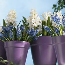 rust oleum glow in the dark paint flower pots. bright before your eyes plant pots; dark stained wood basket with painted bottles inside rust oleum glow in the paint flower pots g