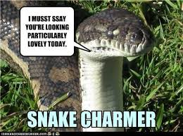 Snake! on Pinterest | Green Trees, Snakes and Boa Constrictor via Relatably.com