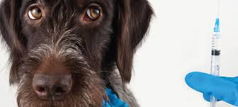 A Policy for Fluffy: Pet insurance is a small industry—but it's ...