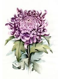 эскизы тату хризантема растения цветы 1 в тату эскизах рисуем на