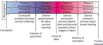 Contraction Timing Chart Printable Physiology Of Labor Williams Obstetrics 24e