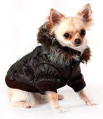 winter dog coats and jackets! keep your chihuahua warm and stylish ... & chihuahua dog parkas coats Adamdwight.com