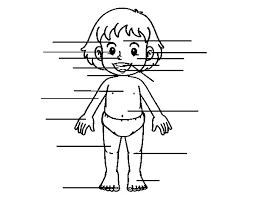 Small Picture Front body coloring page Coloringcrewcom