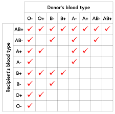 Blood Donor And Recipient Chart Bright Blood Donor And Recipient Chart Blood Group Donor And