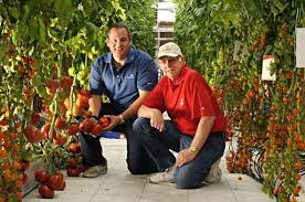 How To Successfully Produce Vegetables In Controlled Environments - Growing  Produce
