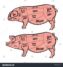 Hog Meat Cuts Chart Cut Meat Set Hand Drawn Pig Stock Vector Royalty Free