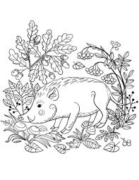 Wild Boar In The Forest Coloring Page Free Printable Coloring Pages