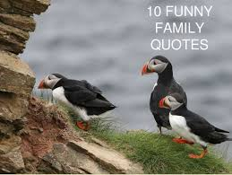 Funny Family Quotes Amazing 48 Funny Family Quotes