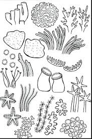 New Simple Coral Reef Coloring Pages Free Coloring Book