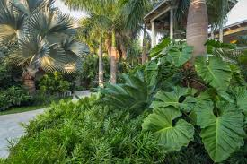 Small Picture Design a Tropical Garden HGTV