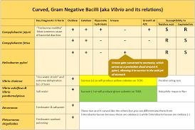 Imvic Chart Microbiology Wordsology