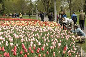 2020 lookahead: New events and attractions bolster Ottawa's tourism landscape - Canadian Tulip Festival