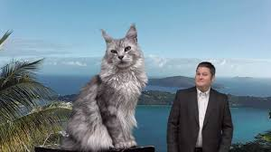 how big is a maine cat you