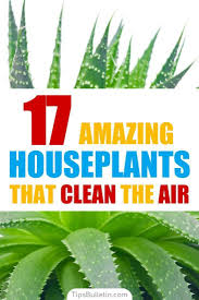 Extremely Low Light Plants 17 Amazing Houseplants That Clean The Air Gardening